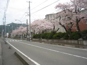 桜がきれいに咲きました